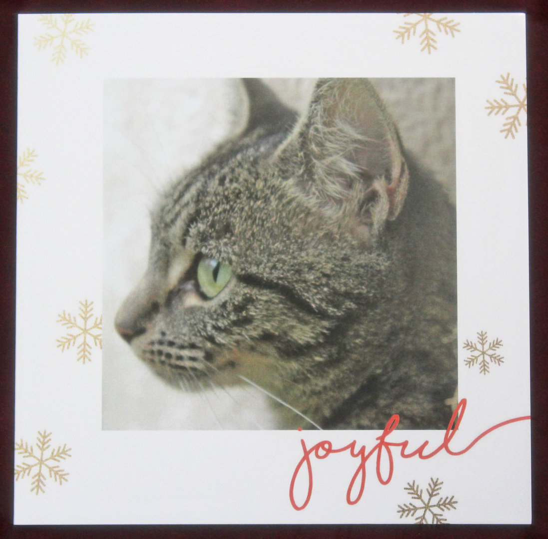 Four Paws Cat Rescue Christmas Cards - Chakrapatch Fairtrade